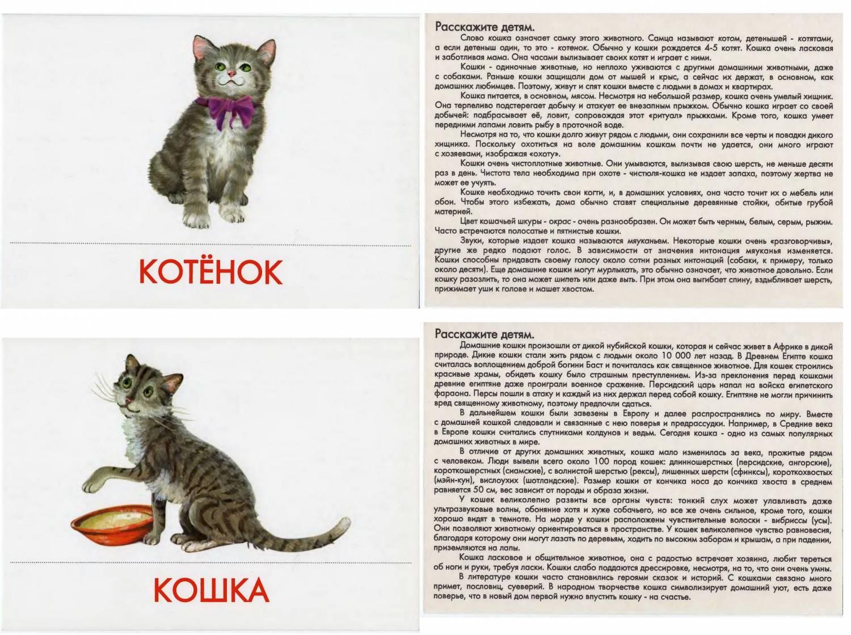 Классы животных домашних условиях - Книга: Обучение детей скорочтению. Полная